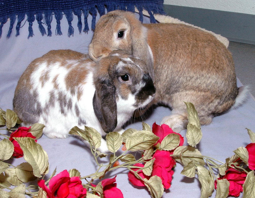 Gretchen & Frank in a bed of roses