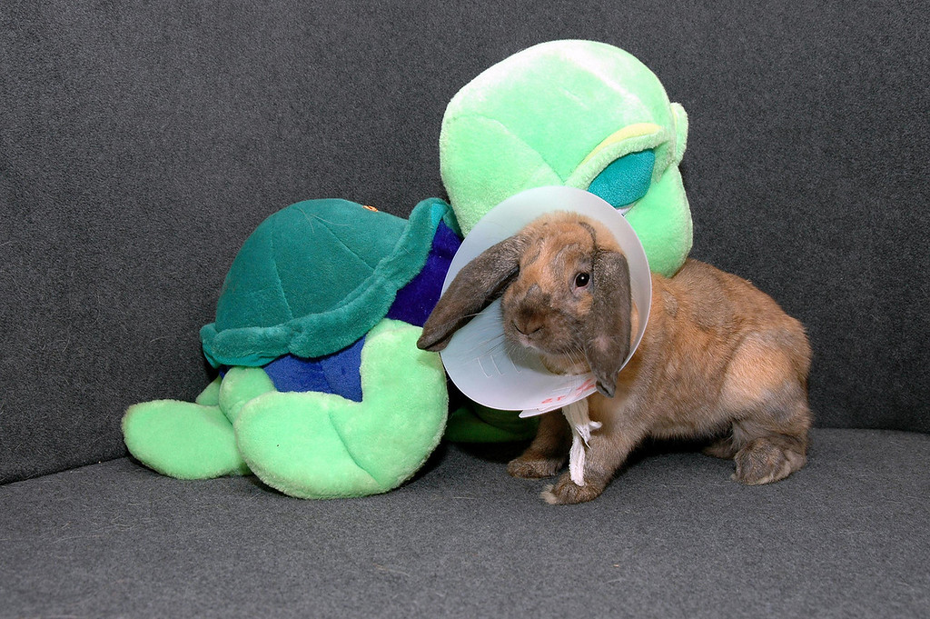 """Benny auditions for an off-off-off-off-Broadway production of """"The Tortoise & the Hare"""""""
