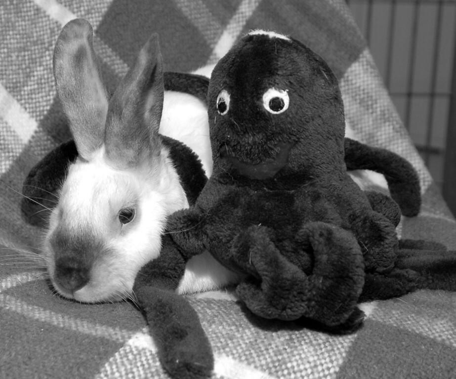 Hobbs with octopus chum