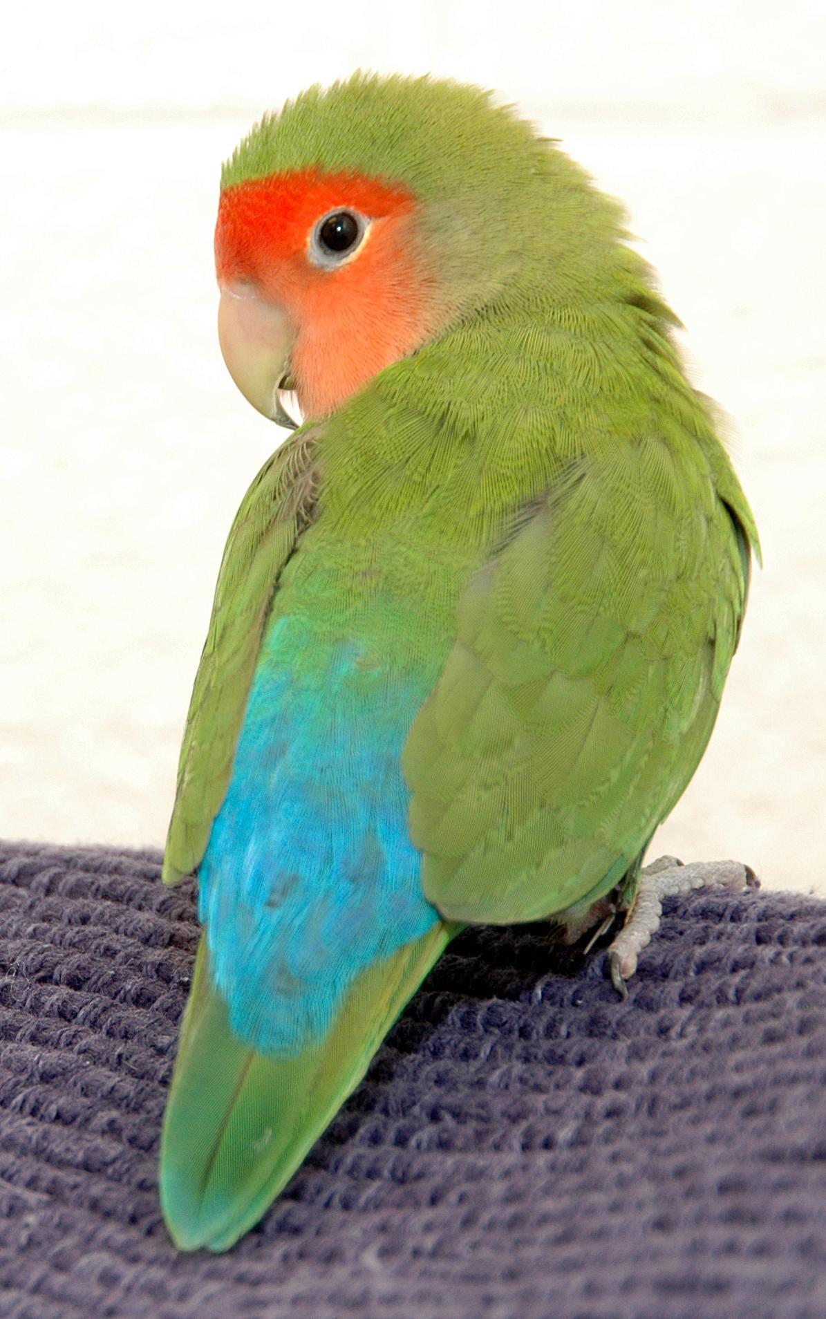 Fkirty Bird portrait