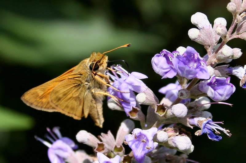 Moth Collecting Nectar from Flower