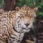 EXPRESS LINK: http://www.animalactorsinc.com