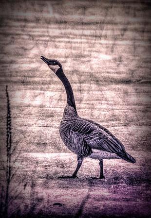 bird48