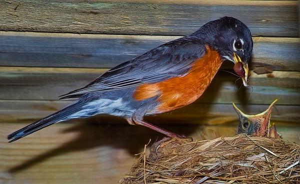 bird16a