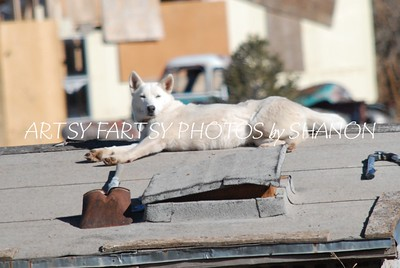 white dog on roof