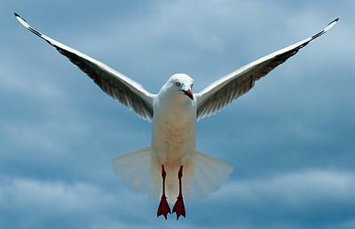 birds / ptaki