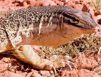 australian wildlife/dzikie zwierzeta Australii