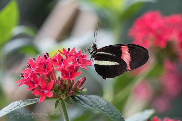 Butterfly Jungle<br /> San Diego Wild Animal Park<br /> March 2017