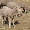 Part of the Herd