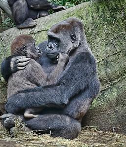 gorills's -marilyn