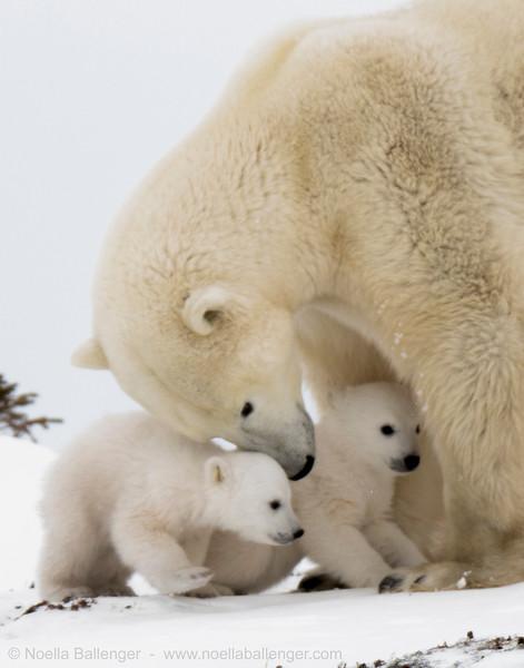 1polar bears-over exp0161