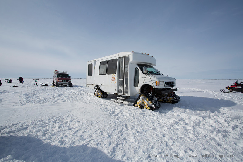 Traveling across frozen lakes and stretches of tundra in these vehicles was a challenge.  Think bucking bronco and then some.  We had some car trouble and one of the others  came back to get us.  We were able to get close enough to the bears to use long lenses to capture their movements but far enough away not to disturb and still maintain safety.