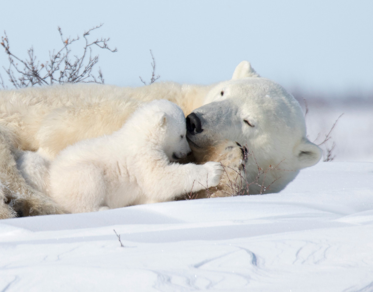 Tender moments between Mom and cub.