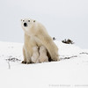 1polar bears-over exp0108