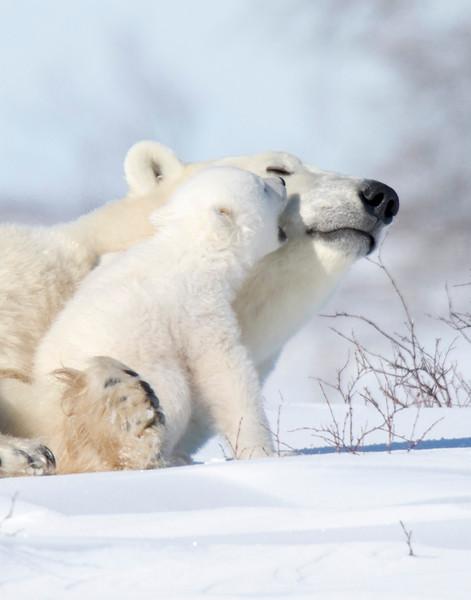 Wake up Mom ...