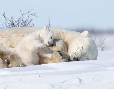 Tender moments between Mom & Cub.