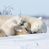 Tender moments between Mom & Cub.