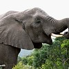 Elephant Lunch