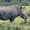 Thandi -- A Poaching Surviver