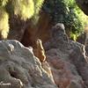 Meerkat Watch 3