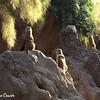 Meerkats On Watch