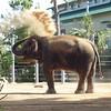 Elephant Dust Bath