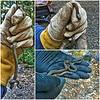 Northwestern Garter Snake—Thamnophis ordinoides