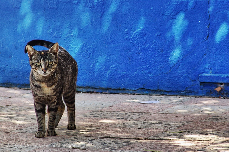 cat from Torres Vedras, Portugal