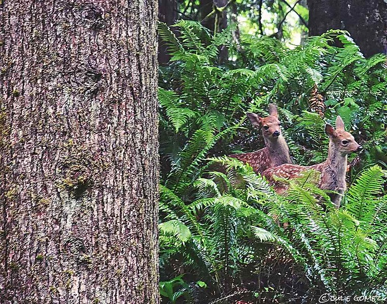 Speckled Fawns