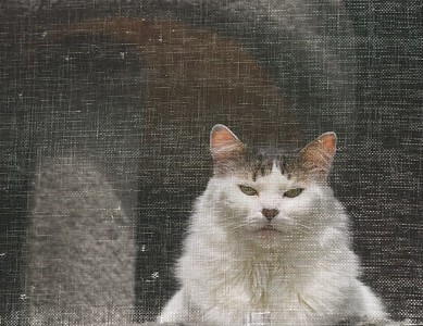 Cat Behind Screen