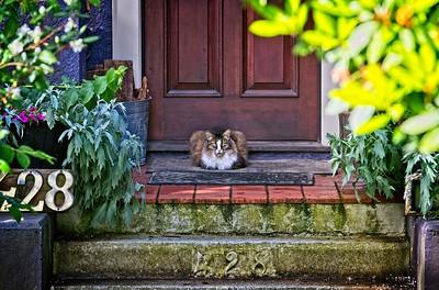 Cat on a Mat