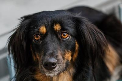 MELANCHOLY DOG