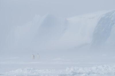 Antarctic Magic