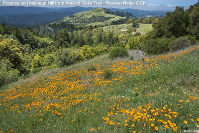 Poppies and Mindego Hill from Ancient Oaks Trail