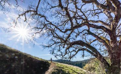 Dee under big oak above Bella Vista Trail