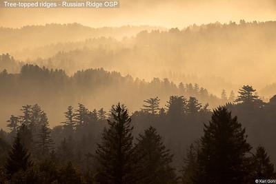 Tree-topped ridges