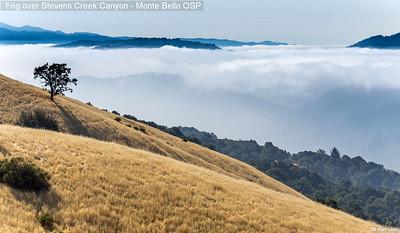 Fog over Stevens Creek Canyon