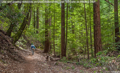 Dee and glowing redwoods on Giant Salamander Trail