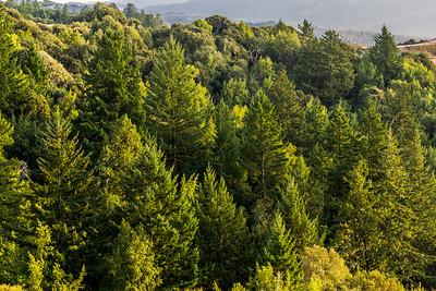 Low angle light on trees