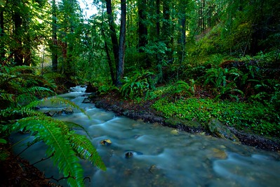 Randy Weber - Purisima Creek Redwoods OSP