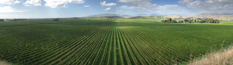 A Vineyard in the north of the South Island.