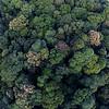 Rainforest canopy - Mary Cairncross Park