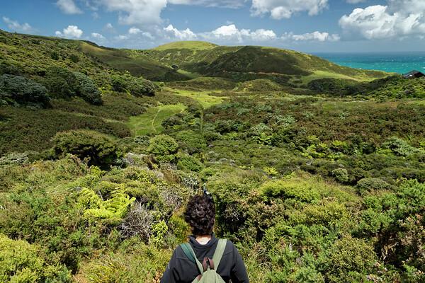 Starting the Hillary Trail at Muriwai