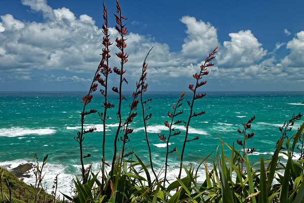 Flax on the west coast