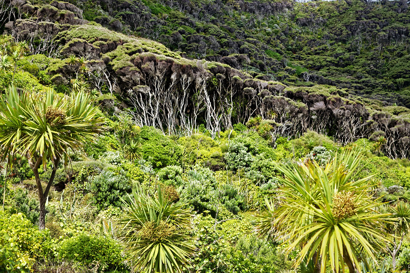 Bush and manuka trees behind Bethells Beach in the Waitakere Ranges