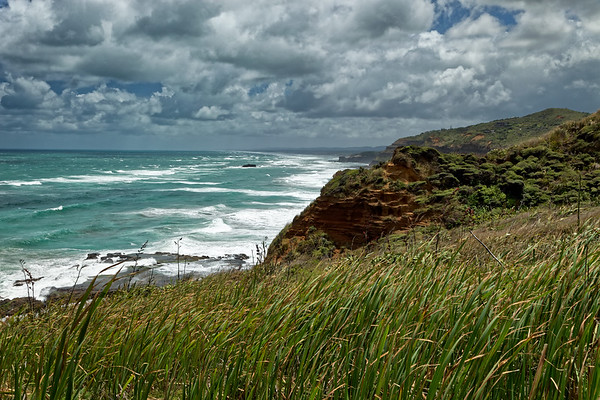 View to Muriwai on the Hillary Trail