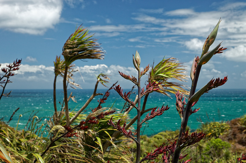 Flax flowers and cabbage trees in the wind