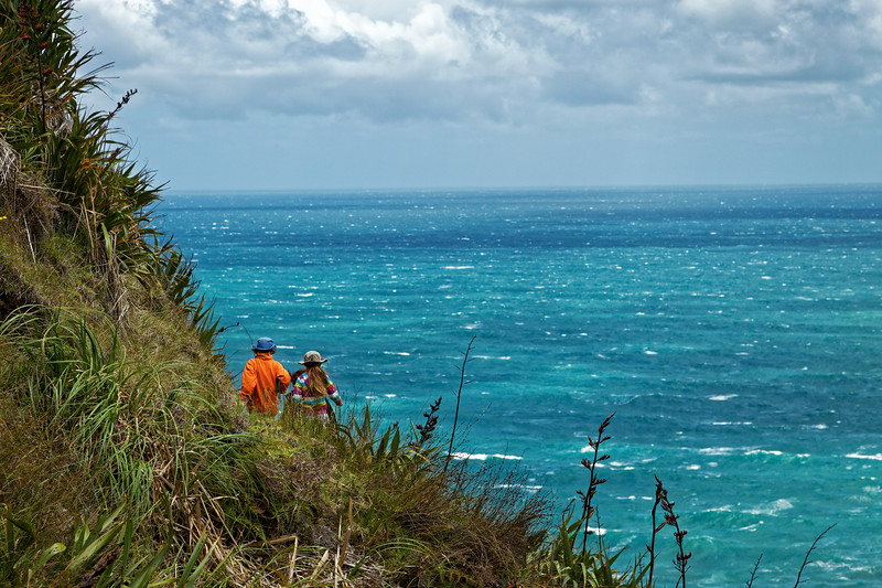 Children negotiate coastal track on the side of a hill on the Hillary Trail in the Waitakere Ranges west of Auckland