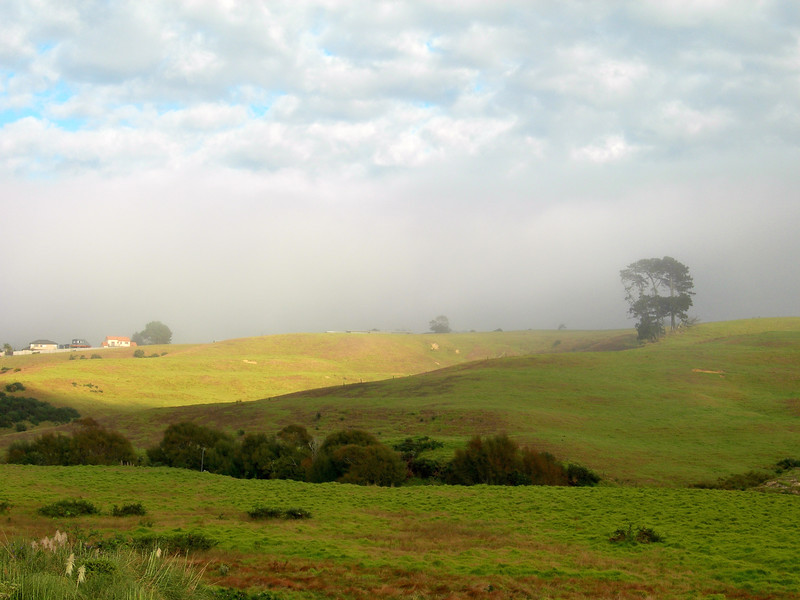 Misty morning on the green hills of Long Bay, 10 years ago