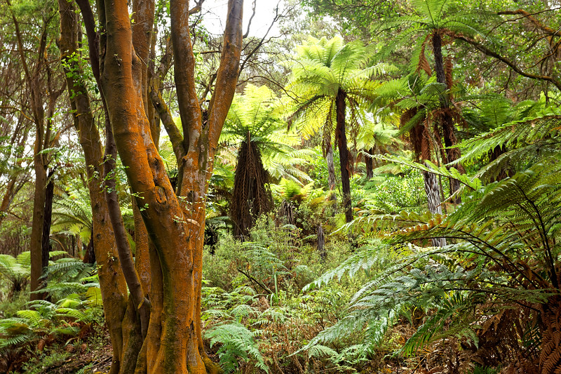 "Native NZ woodland at Hells Gate, ""the Beast of all Geothermal Parks"", says the guide"